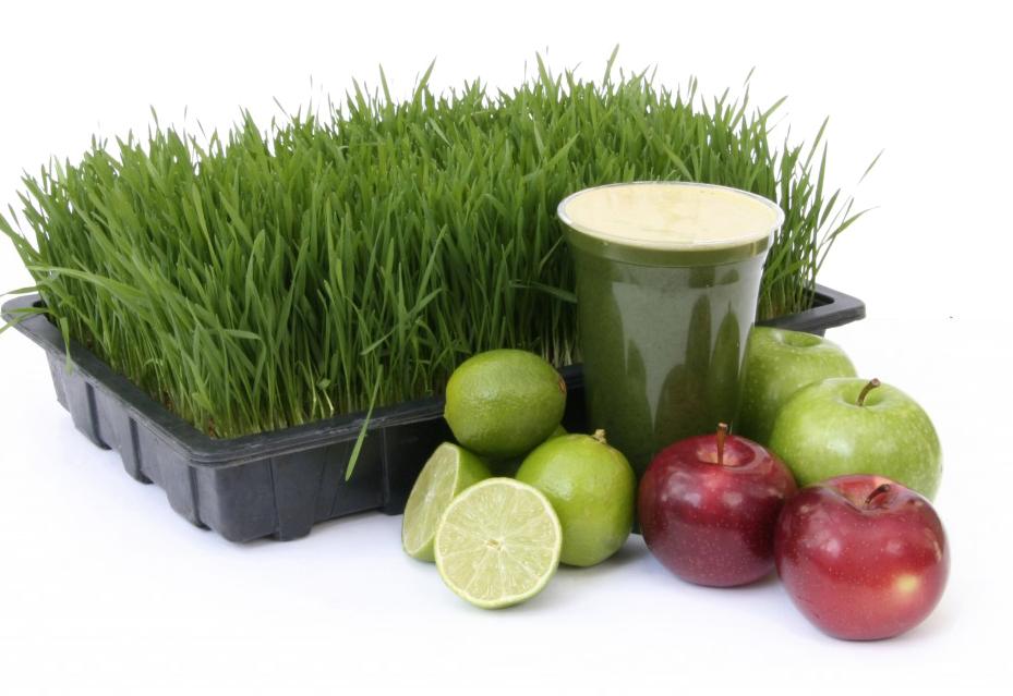 wheatgrassshot