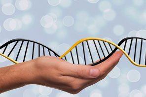 Epigenetics and Nutrition